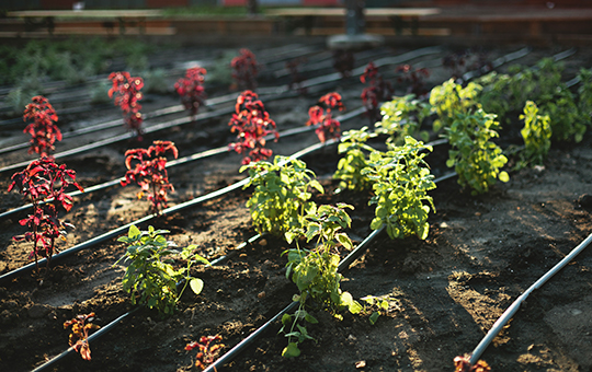 Grow Your Own Vegetables! November 2
